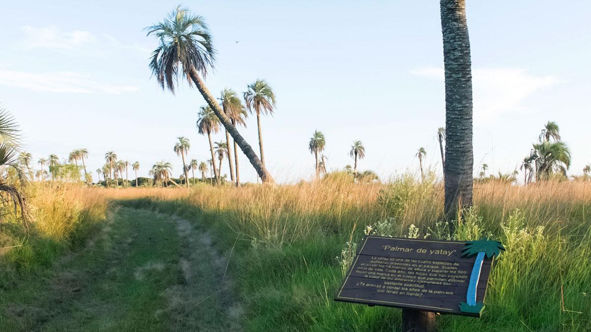 Parque nacional Mburucuyá palmar yatay