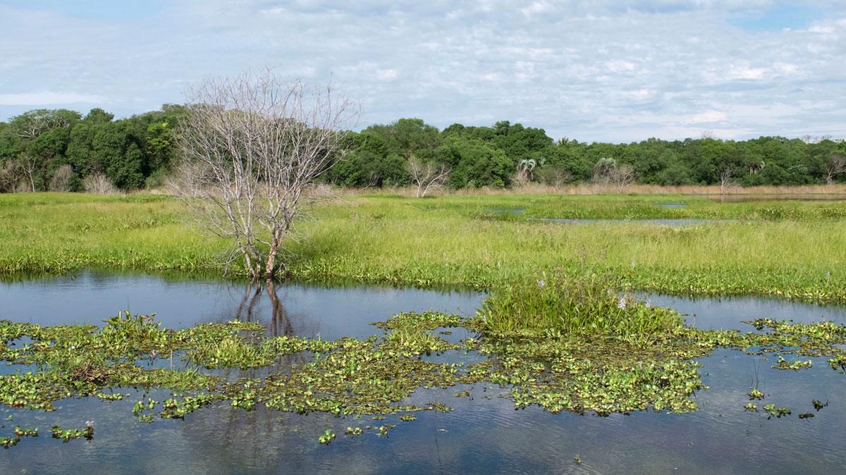 Parque nacional Mburucuyá esteros arbol