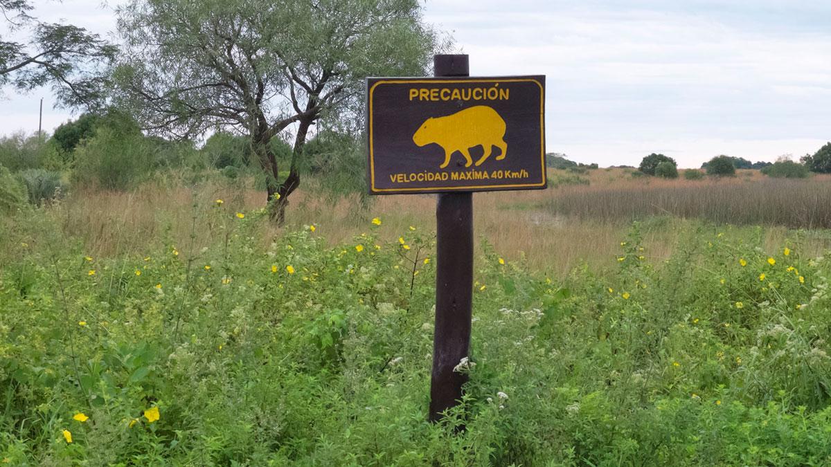 Parque nacional Mburucuyá cartel velocidad carpincho