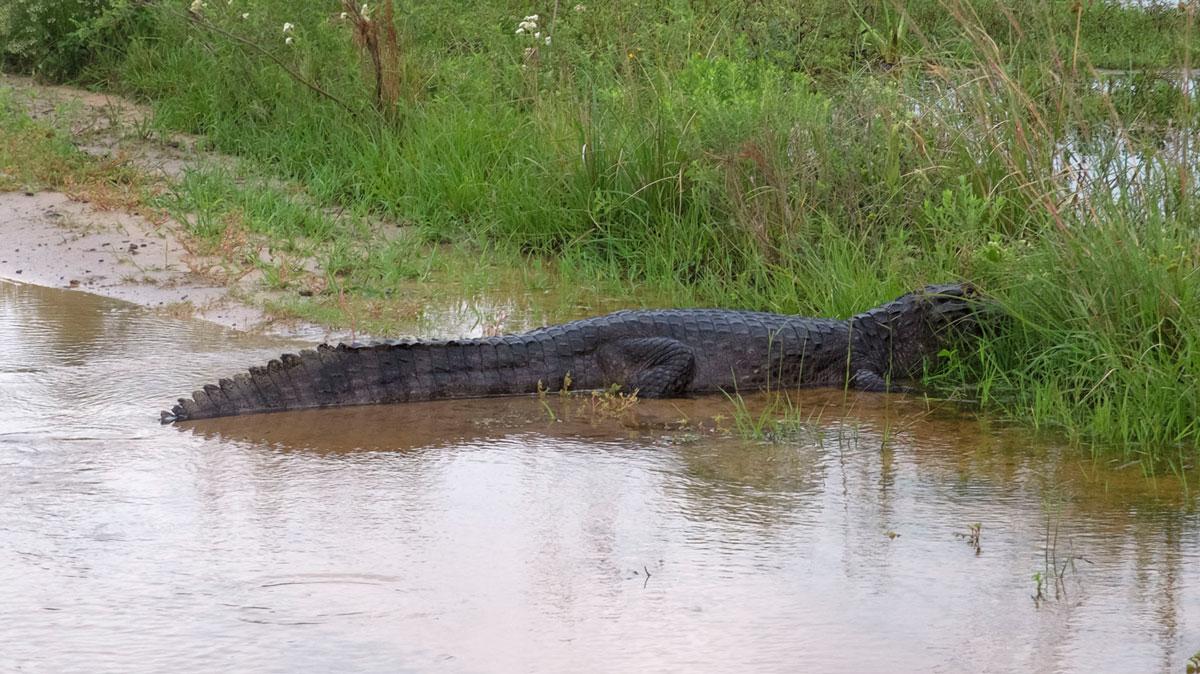 Parque nacional Mburucuyá inundación temporal camino cortado camino yacaré
