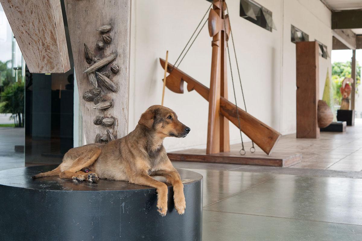 Resistencia chaco argentina escultura perro