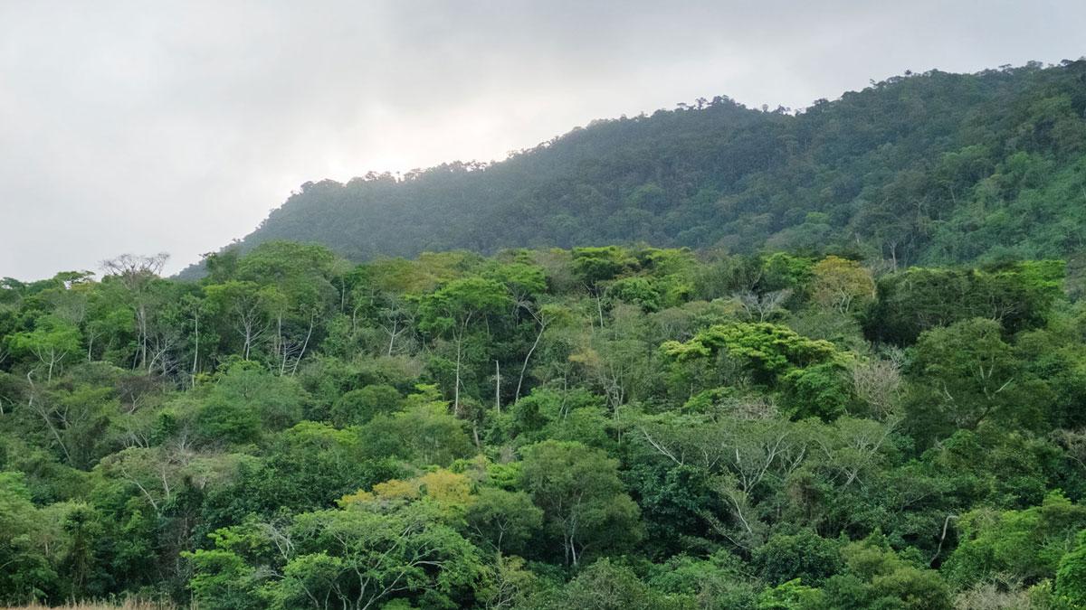 Ilha Grande Forêt tropicale humide atlantique