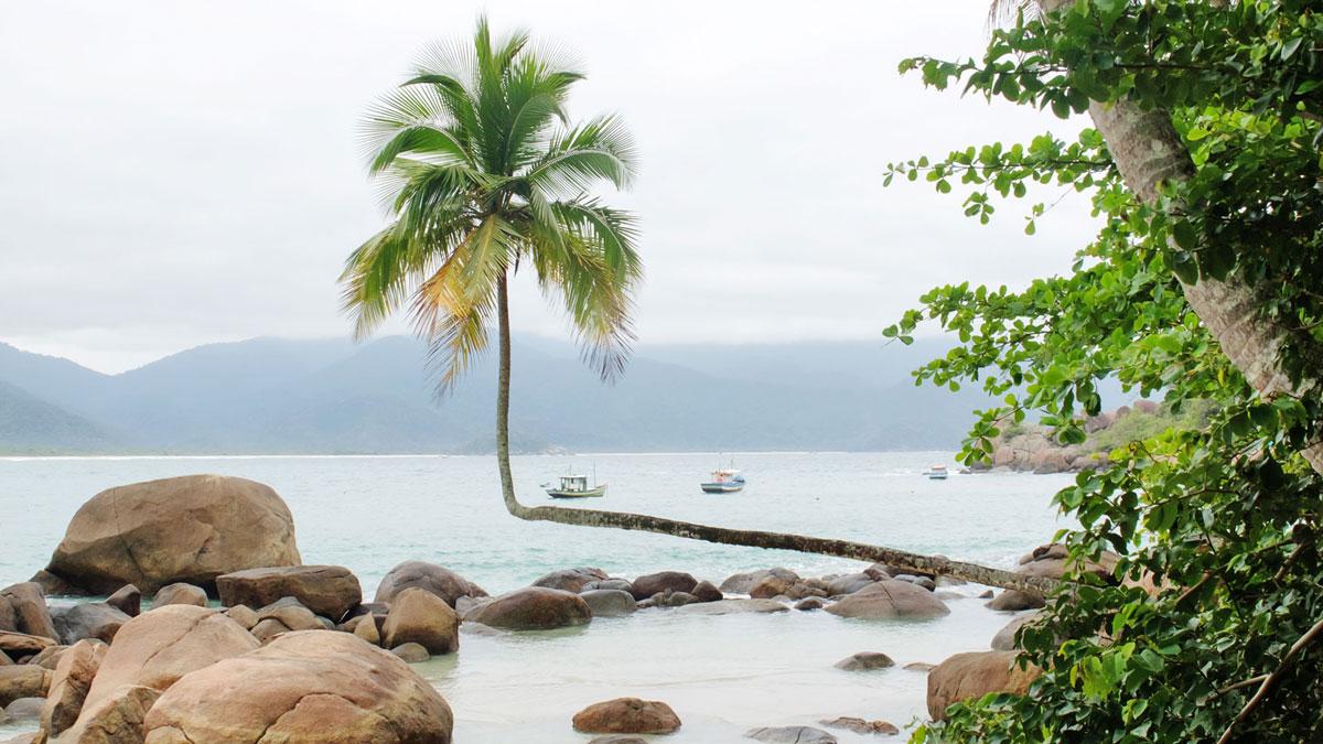 Ilha Grande Aventureiro palmier