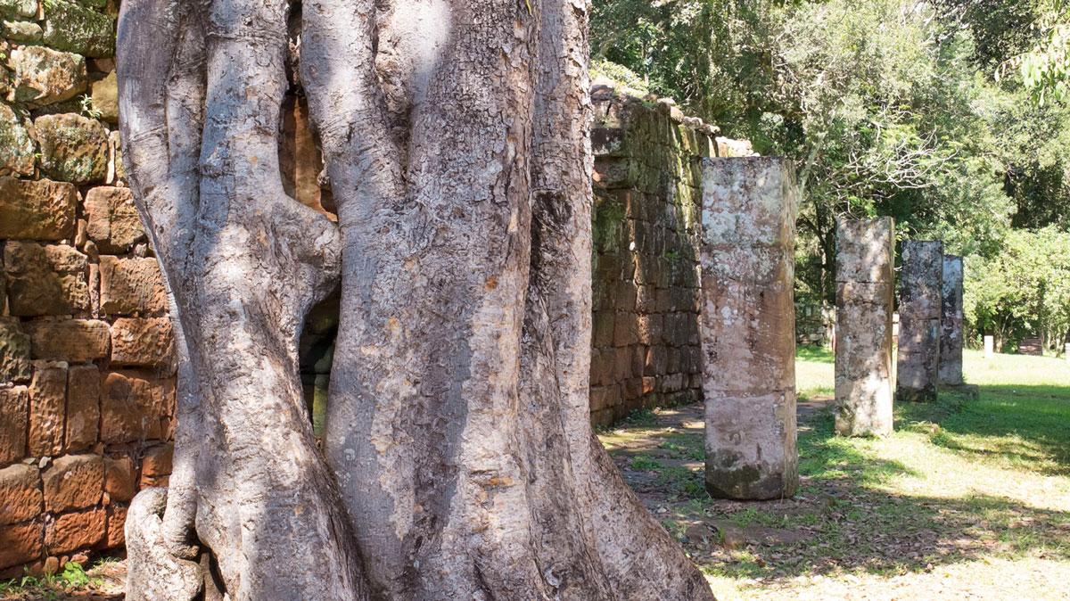 Mission jésuite guarani san ignacio mini colonne arbre