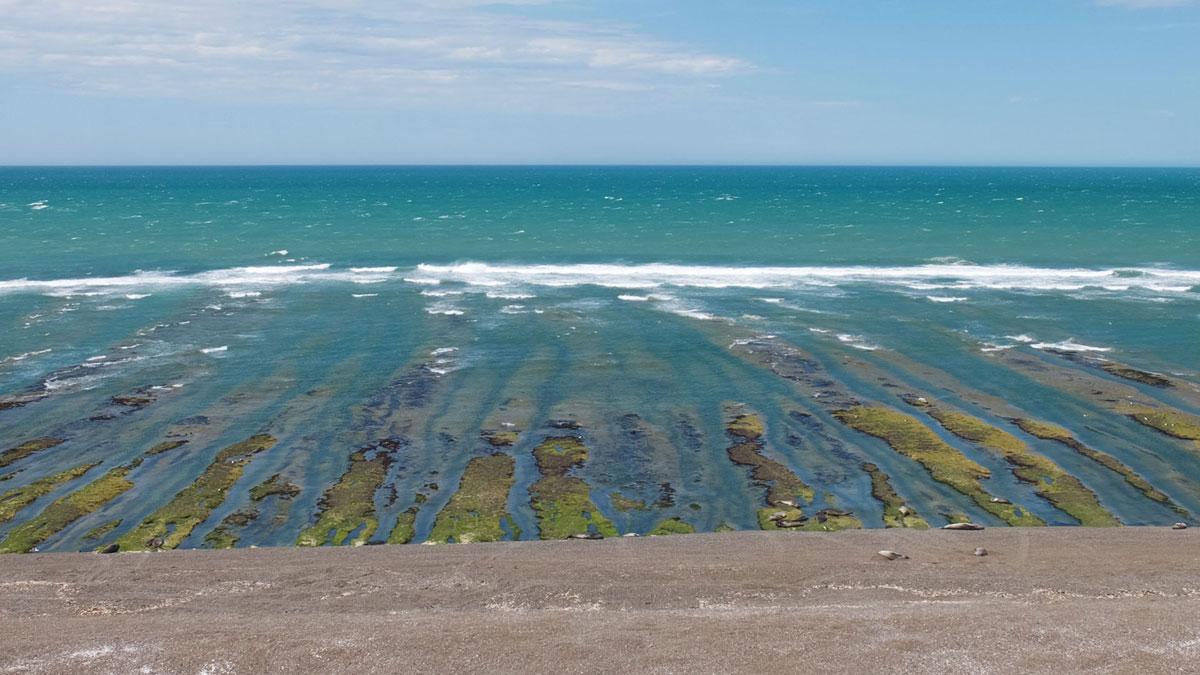 Península Valdés, refuge inhospitalier des animaux de Patagonie