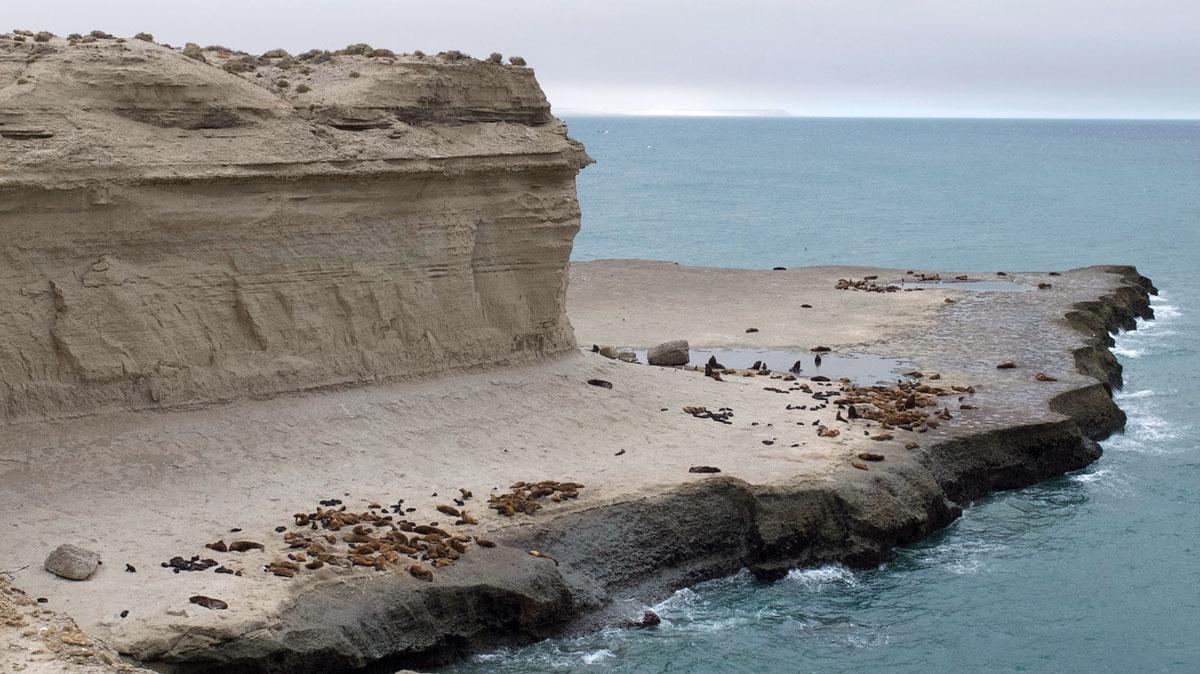 Peninsula Valdès loberia punta piramides éléphant de mer