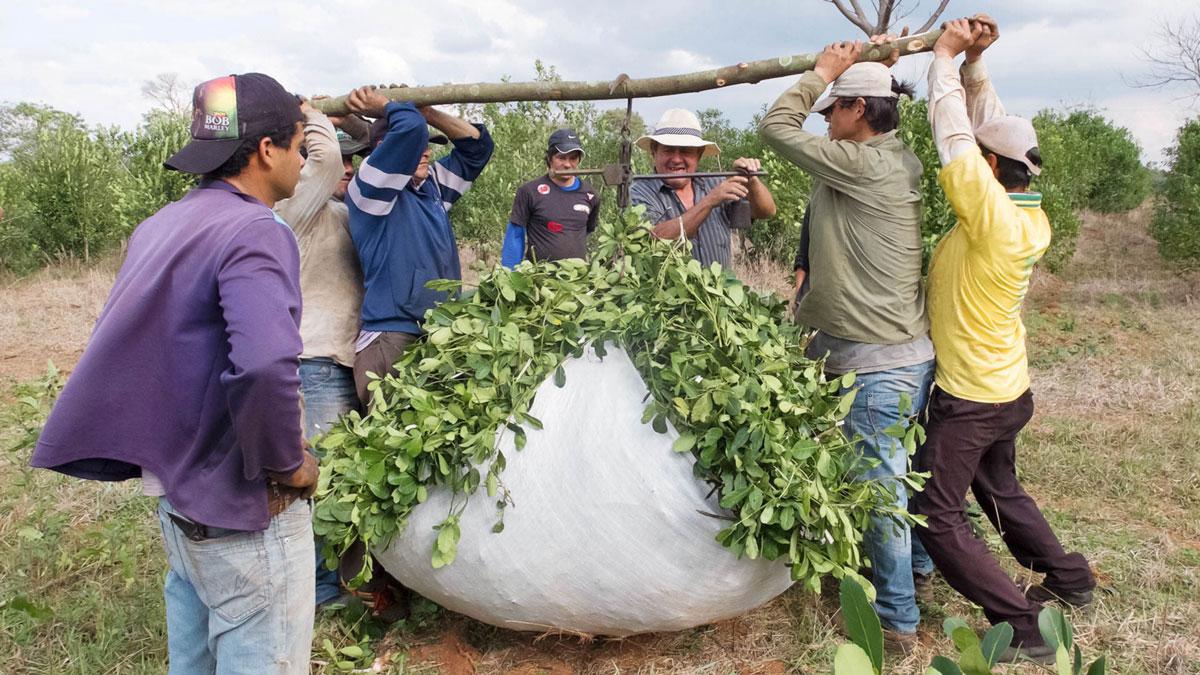 Paraguay paso yobai Ouvriers pesage yerba maté