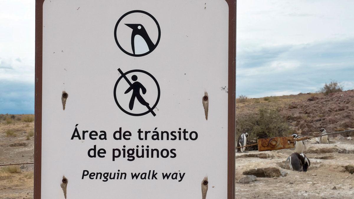 Argentine Patagonie Cabo Dos Bahias Colonie Pingouins Manchot de Magellan aire réservée