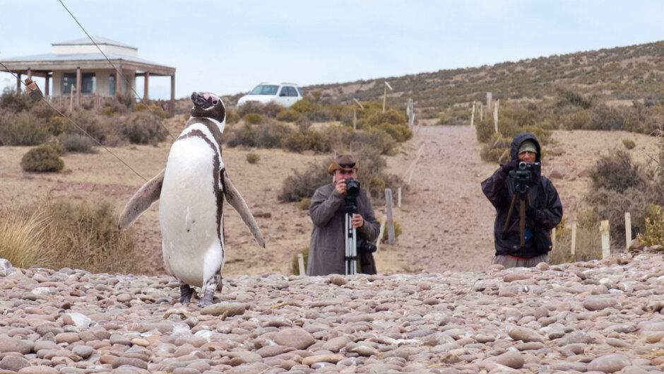 Voyage au pays des pingouins…