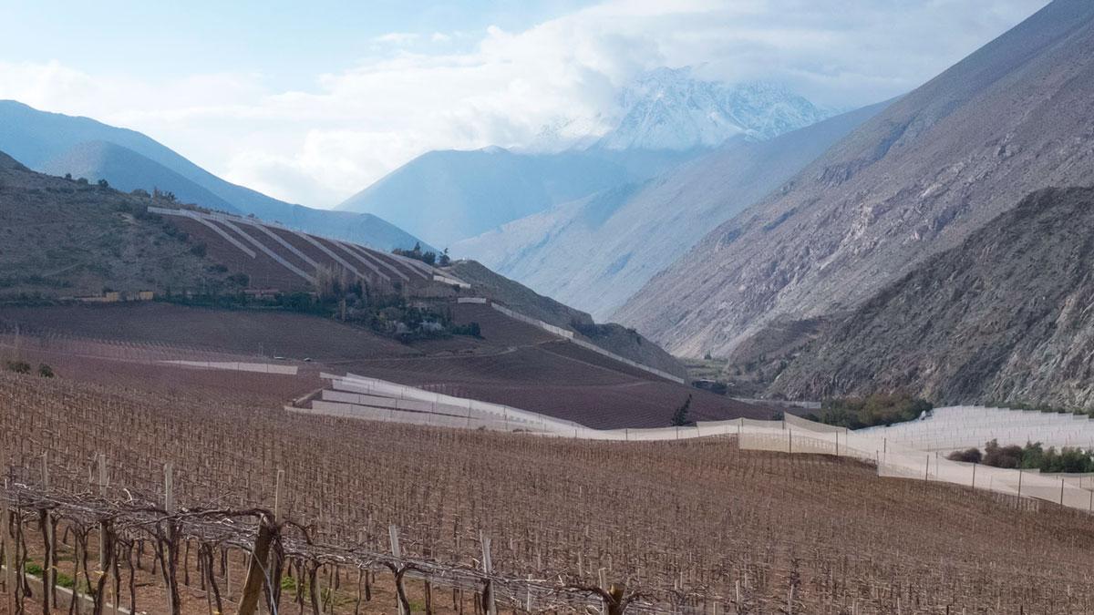 Chili Valle del Elqui paysage de vignobles