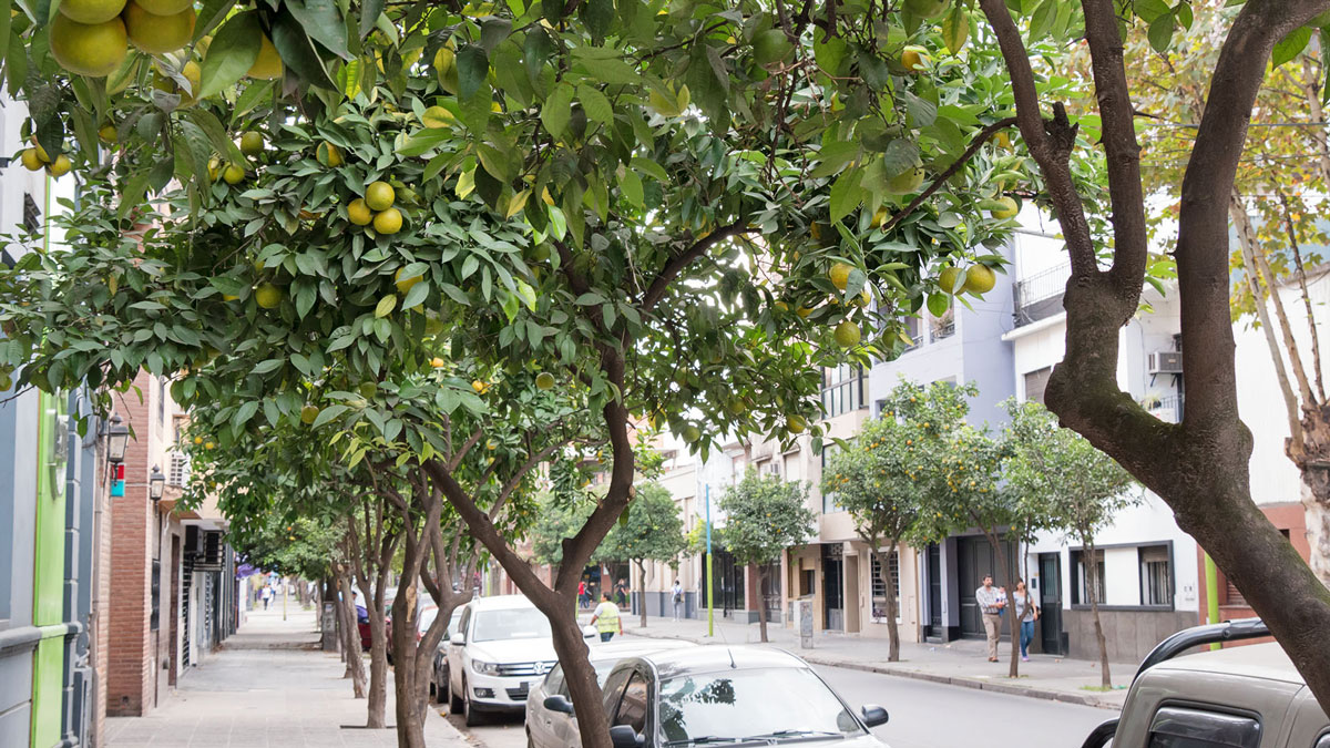 Argentine Tucuman Street Photography rues bigaradiers orangers